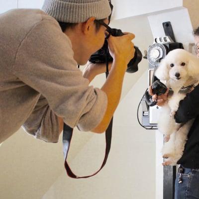 3月3日(日)12:00開催チャリティわんこフォトセッション〜愛犬の記念撮影会〜at西新井