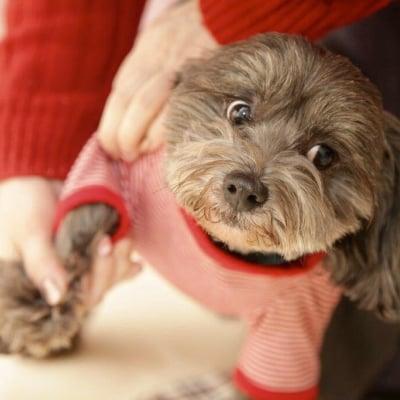 6月23日(日)11:30開催チャリティわんこフォトセッション〜愛犬の記念撮影会〜大崎