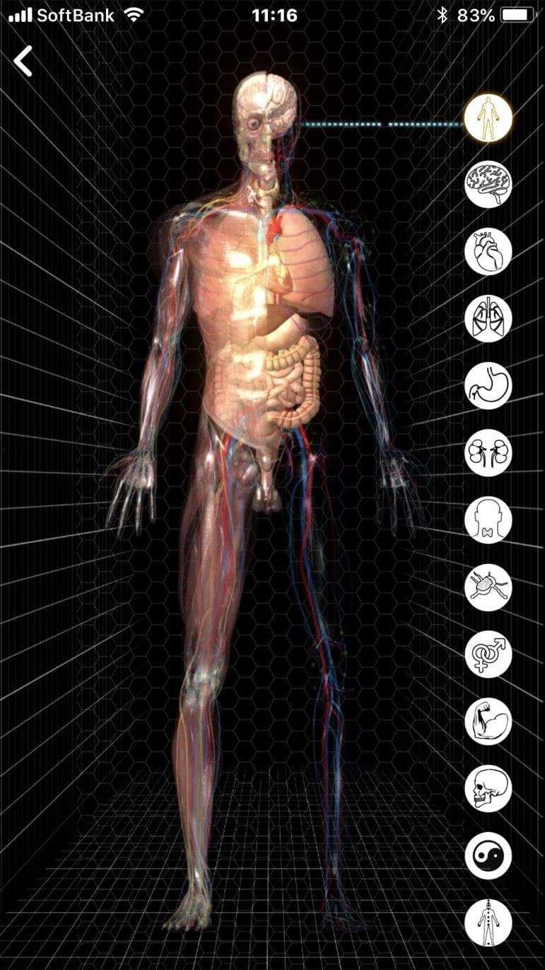 【現地払い】量子波動器の体内調整(全身ツボ押し)15分個別体験・脅威の水素入り珈琲付 江の島/腰越|量子波動分析器による全身調整のイメージその6