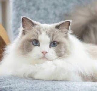 猫の石けん 長毛種用 ハーフサイズ