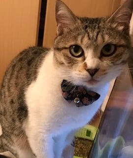 猫の石けん 短毛種用 ハーフサイズ