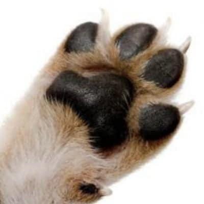 夏の犬石けん 足洗い用#5【やや乾燥肌】お徳用2個セット