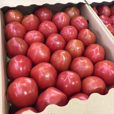 【高ポイント】【期間限定】高糖度 佐賀県産 サンロードトマト
