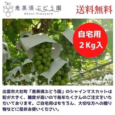 【ご自宅用などに】出雲 大社町産シャインマスカット2キロ入(4〜5房入)