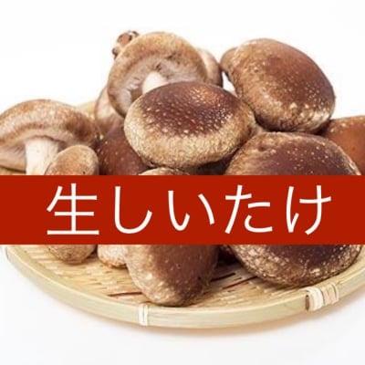 鳥取県西伯郡日吉津村伯耆(ほうき)のきのこ肉厚生しいたけ1袋(5個〜7個)