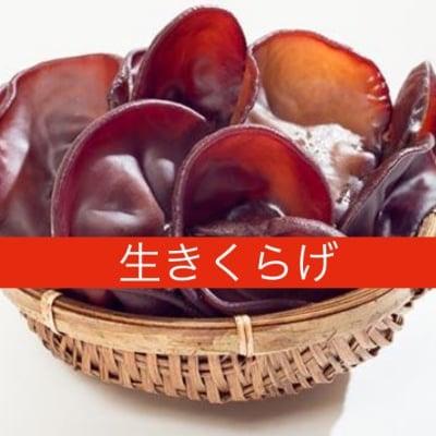 鳥取県西伯郡日吉津村伯耆(ほうき)のきのこ生きくらげ1パック(150g)