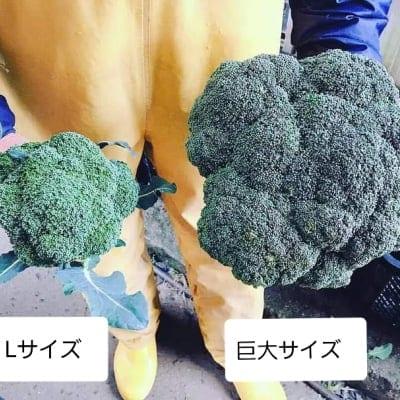 【送料無料】鳥取大山の麓で育った巨大ブロッコリー6株入り