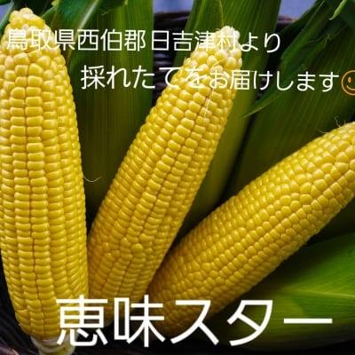 【送料無料】約1㎏!!鳥取大山の麓で育った生でも食べれるトウモロコシ