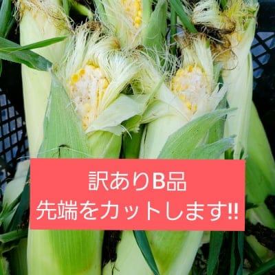 【送料無料】訳ありB品約4㎏!!鳥取大山の麓で育った生でも食べれるト...