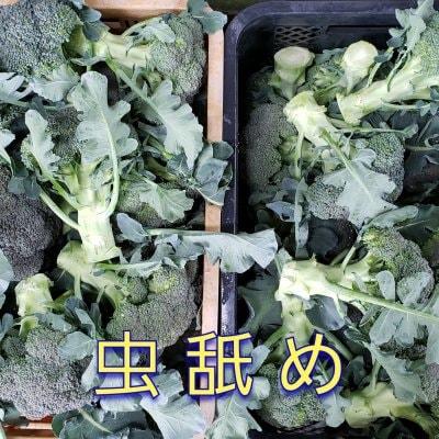 【送料無料】訳あり(虫舐め)ブロッコリー5kg バラ箱入り 鳥取大山の麓で...