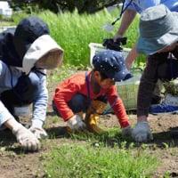 横浜自然栽培農法体験教室