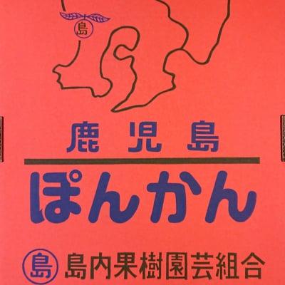 【先行予約開始】【2/20以降・順次発送】薩州ぽんかん/5kg 鹿児島県産
