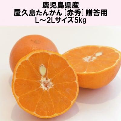 屋久島たんかん[赤秀]贈答用/L〜2Lサイズ5kg|鹿児島県産