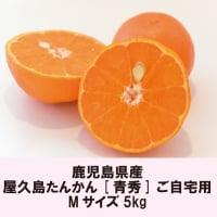屋久島たんかん5kg|Mサイズ|化粧箱|自宅用|鹿児島県産