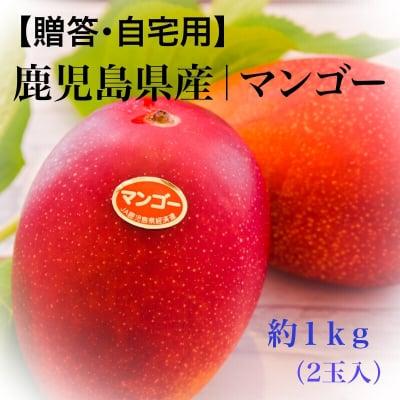 【特別価格】鹿児島県産|完熟マンゴー約1kg(2玉入)4Lサイズ