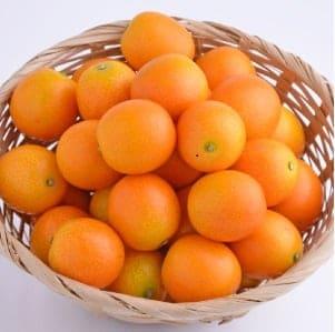 フルーツ金柑|鹿児島県産|ネット入約1kg(大玉)