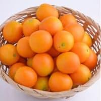 【売り尽くしセール】フルーツ金柑|約1kg(大玉)|ネット袋入|鹿児島県産