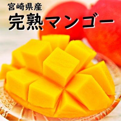 宮崎県産|完熟マンゴー|1玉入|