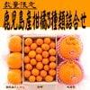 【数量限定】鹿児島産柑橘3種類詰め合わせ