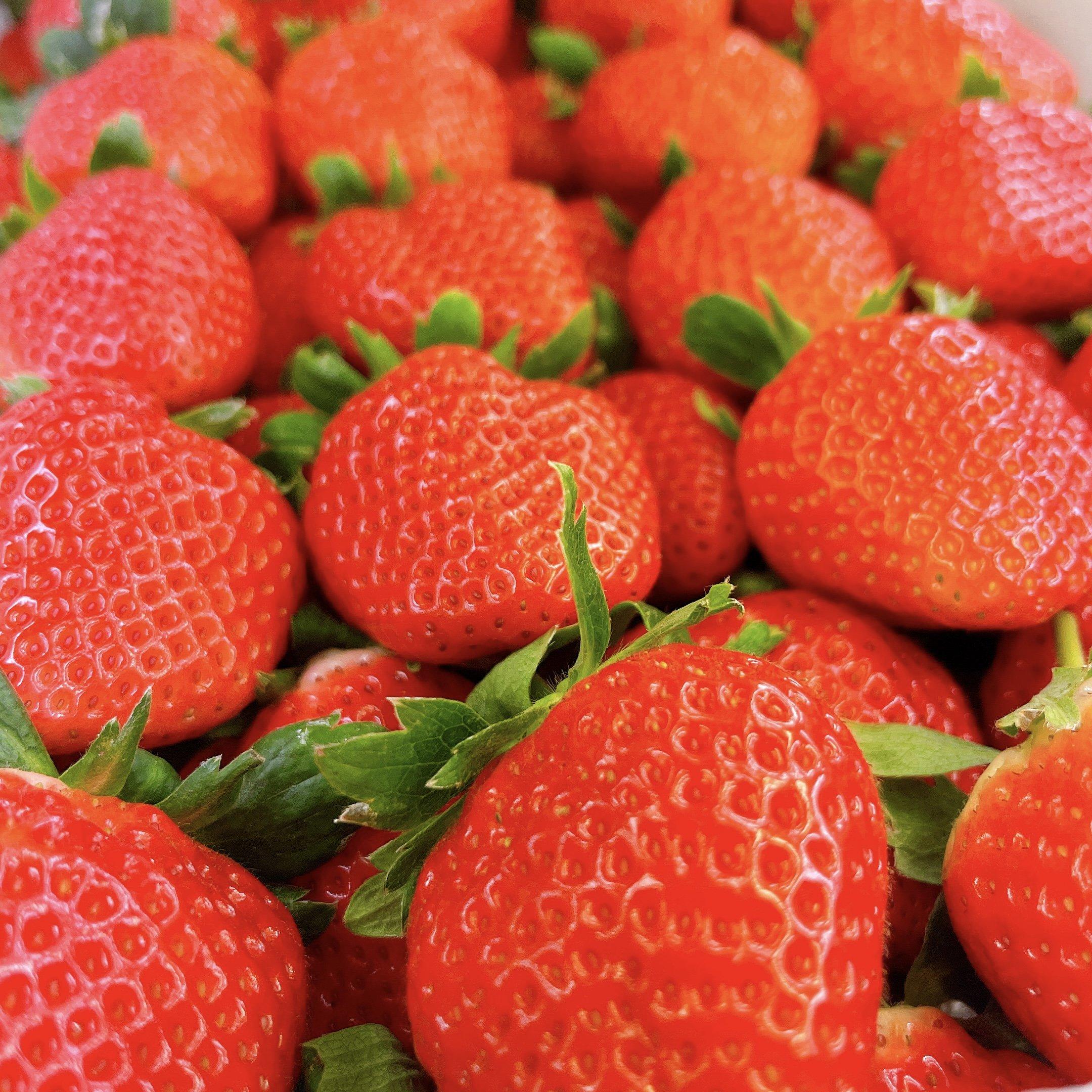 苺 さがほのか 鹿児島県産 大粒 約1.5㎏ 事前注文のイメージその3