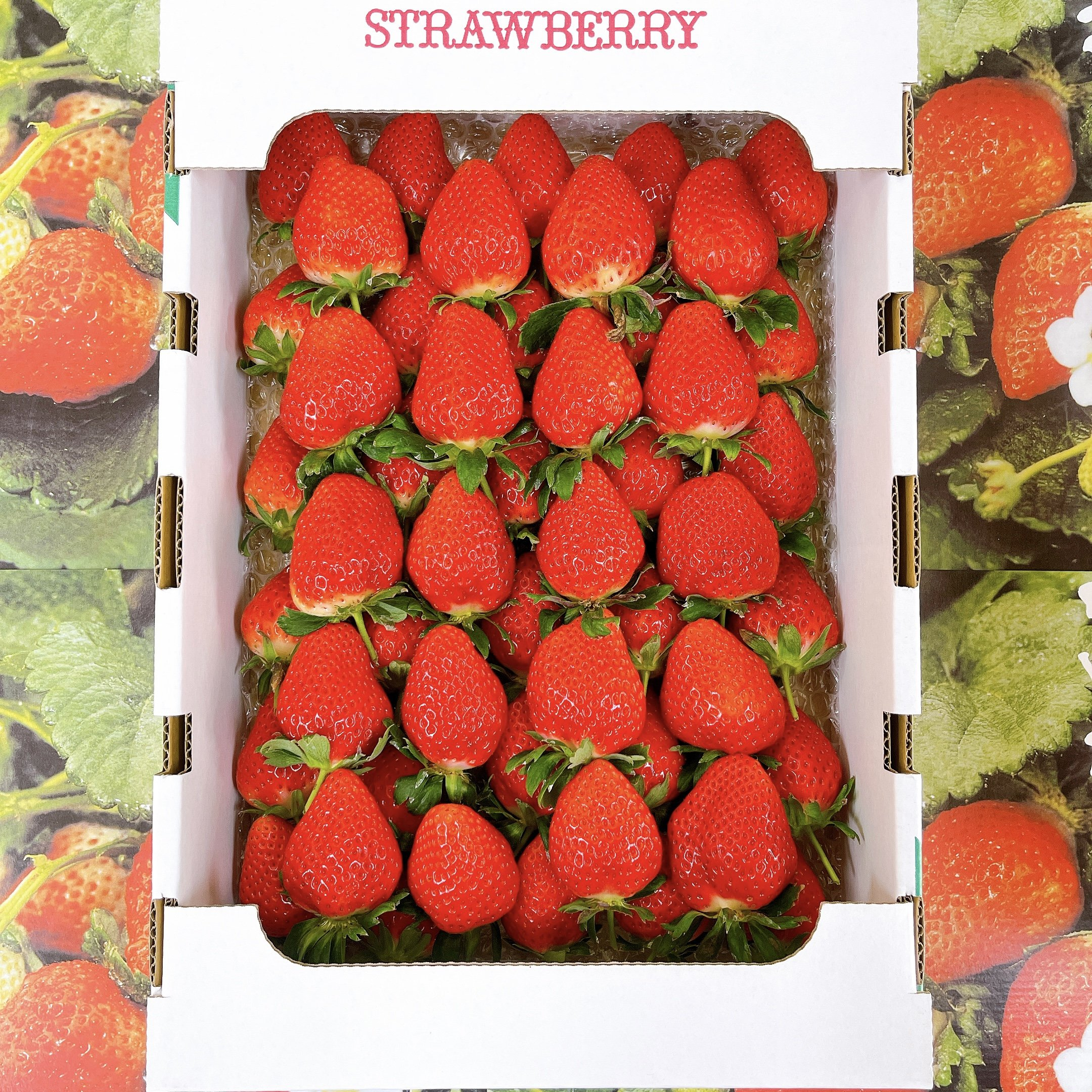 苺 さがほのか 鹿児島県産 大粒 約1.5㎏ 事前注文のイメージその1