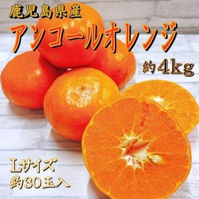 【数量限定・期間限定】アンコールオレンジ|約4kg|Lサイズ|贈答用|