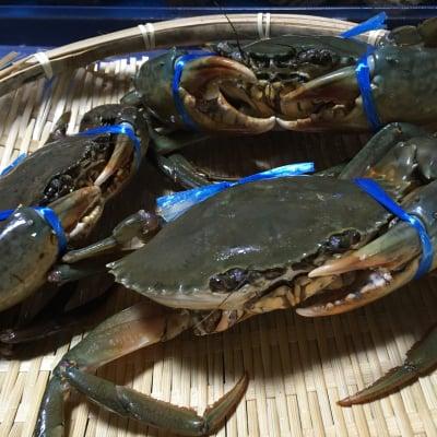 幻の蟹‼浦戸湾産天然活エガニ‼訳あり‼【1300g】3匹程度