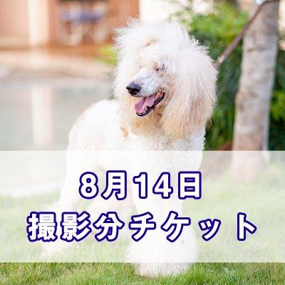 8月14日 撮影分チケット2