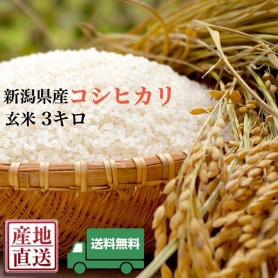 [送料無料]新潟県産直送100%コシヒカリ/玄米3キロ/新米3㎏×1袋