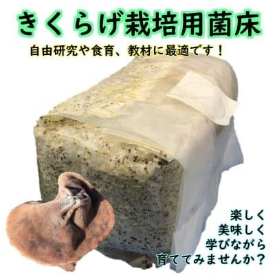 きくらげ栽培用菌床【自由研究や食育にオススメ!! | 収穫後は肥料などに!! | 1個入り】