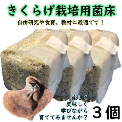 きくらげ栽培用菌床【自由研究や食育にオススメ!! | 収穫後は肥料などに!! | 3個入り】