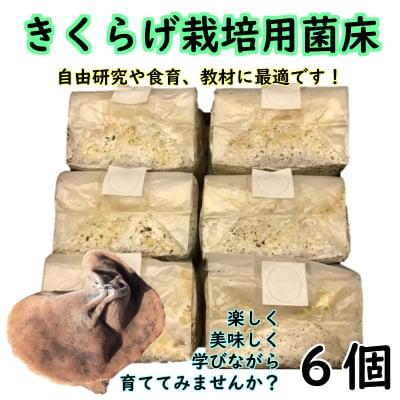 きくらげ栽培用菌床【自由研究や食育にオススメ!! | 収穫後は肥料などに!! | 6個入り】
