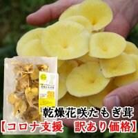 【コロナ支援 訳あり価格】乾燥花咲たもぎ茸 (1袋20g)
