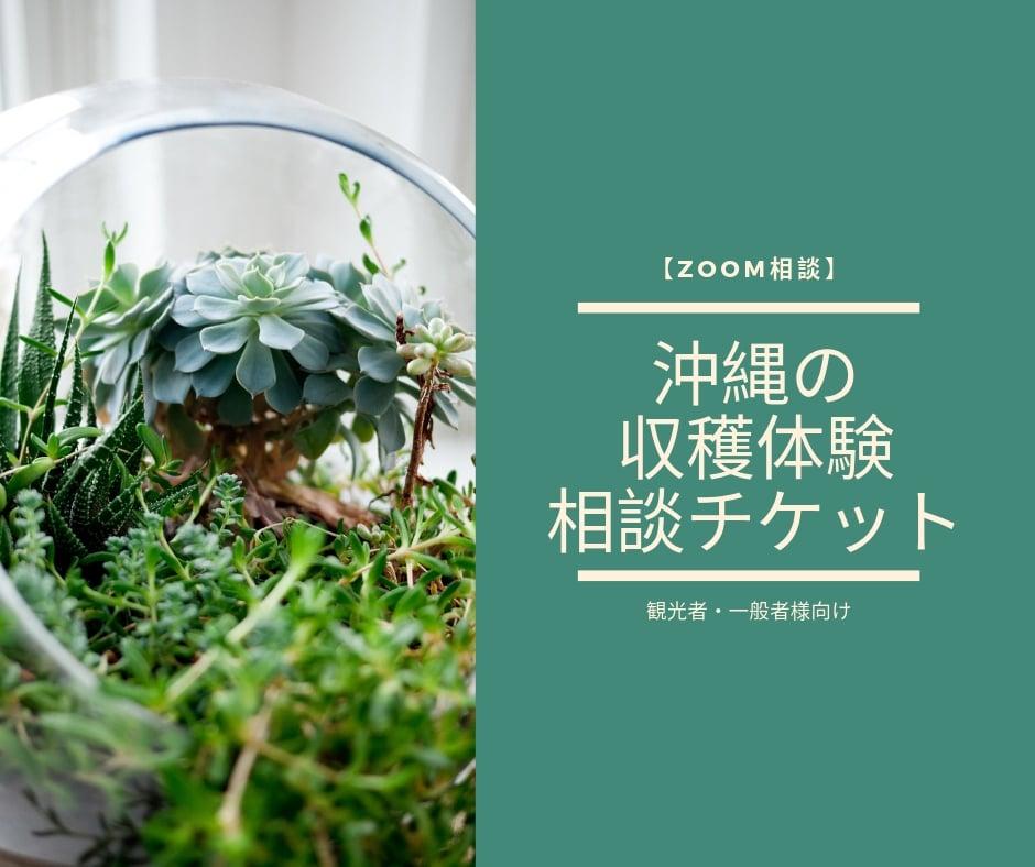 【ZOOM相談】沖縄の収穫体験の相談チケット(観光者・一般者様向け)のイメージその1