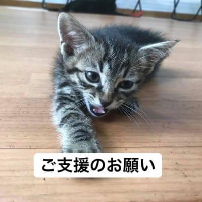 ご支援のお願い 1000円