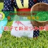 【予約者専用・現地払い】茶摘み体験チケット(大人1名子ども1名)