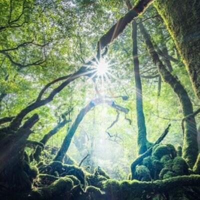 屋久島 自然神宇宙神祈り リトリート(8/6-8/11)・地球創生SNS会員価格