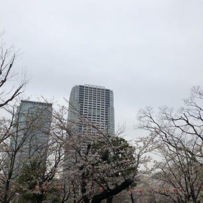 【現地払い専用】3/31(日)花見🌸[男性用]