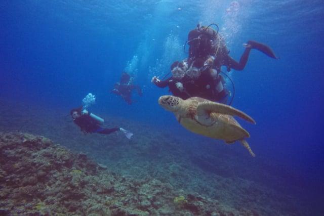 【沖縄・那覇】海ガメに逢える!?初心者でも安心の体験ダイビング1回(国立指定公園慶良間諸島コース)のイメージその3