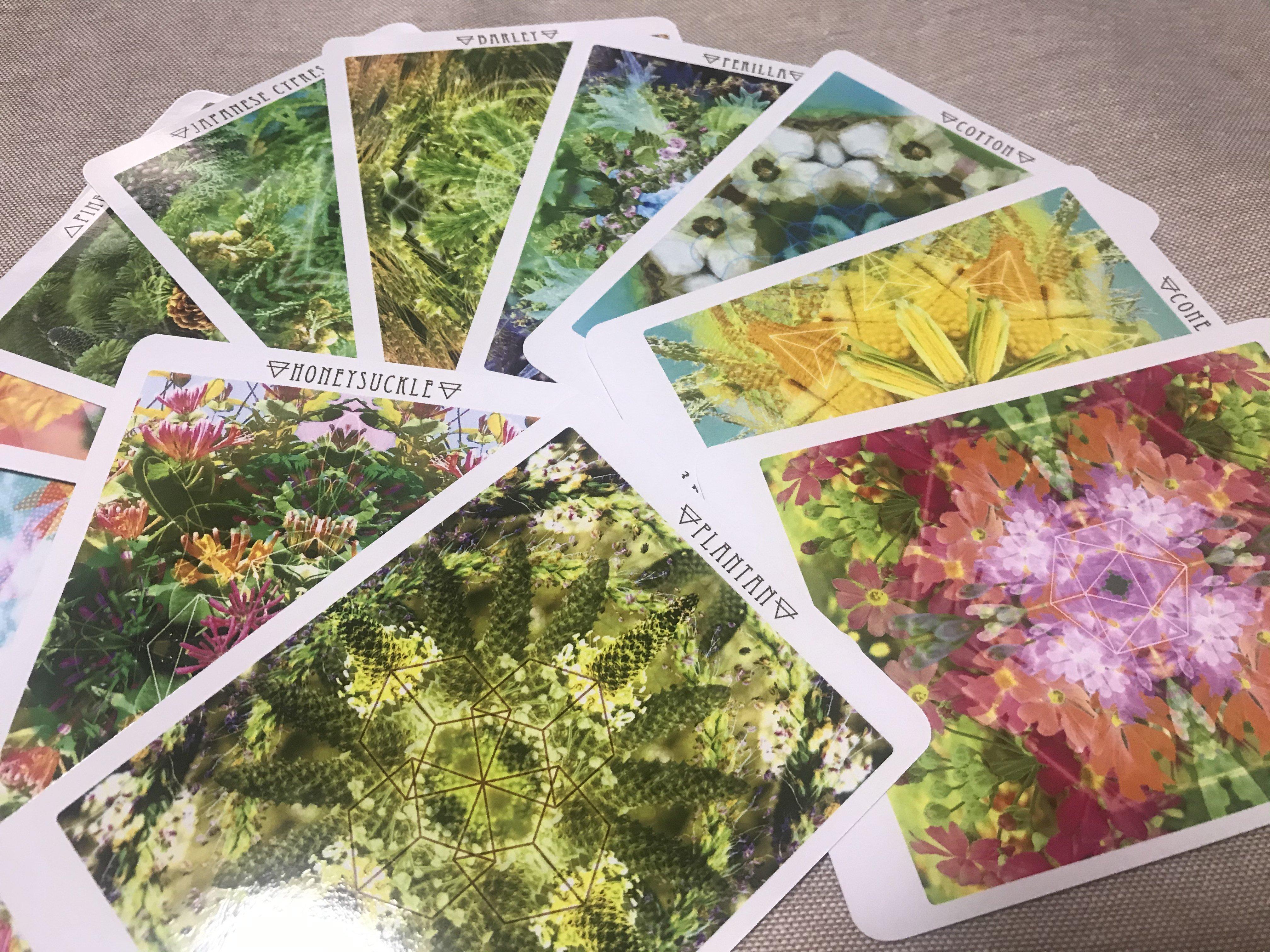 「花曼荼羅®カード鑑定」「花曼荼羅®塗り絵」セットチケットのイメージその1