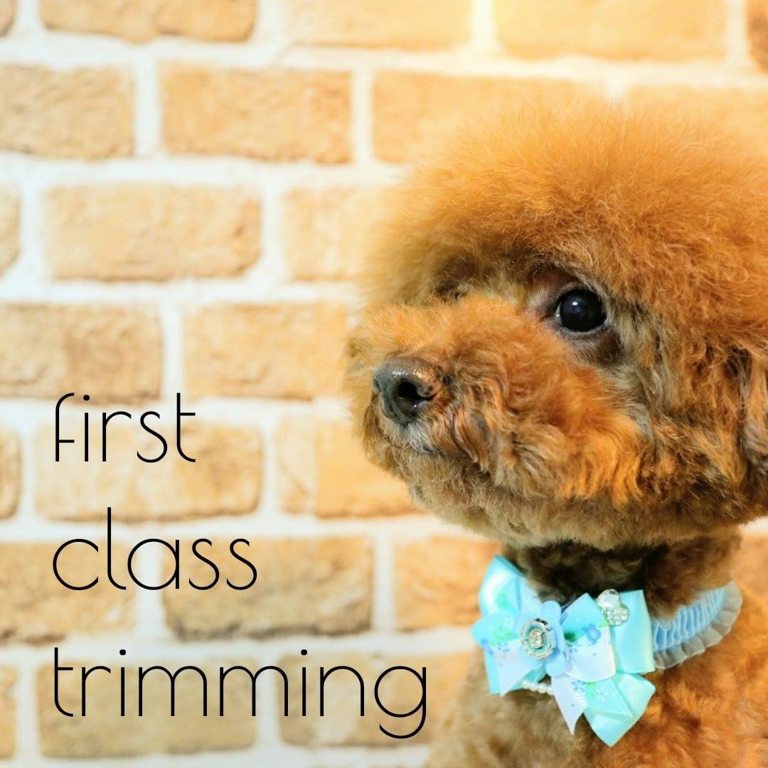 ツクツク!!限定 first class trimming (ファーストクラストリミング) 年間利用コース 5キロまで共通のイメージその6