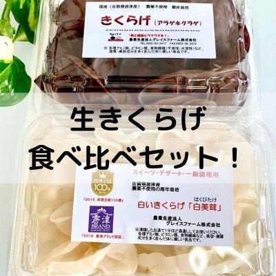 生きくらげ食べ比べセット200g【白と黒のきくらげを贅沢に食べ比べ♪】