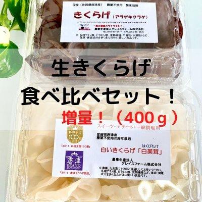 増量!生きくらげ食べ比べセット400g【白と黒のきくらげを贅沢に食べ比...