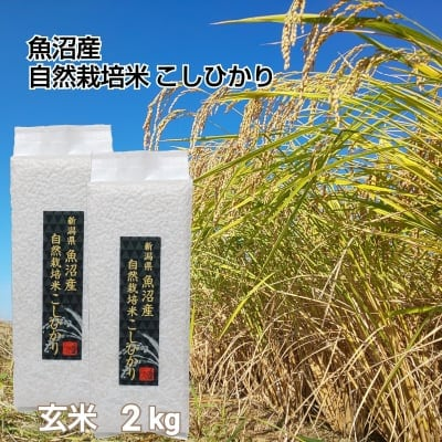【魚沼産|自然栽培米コシヒカリ】「玄米」2㎏(1㎏×2袋)【無農薬|無肥料】
