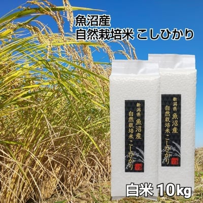 【魚沼産|自然栽培米コシヒカリ】「白米」10㎏(1㎏×10袋)【無農薬|無肥料】