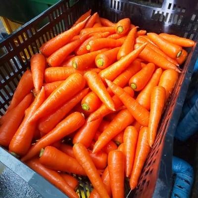 【新潟駅南マルシェ専用】ミノリ農産の野菜1袋120円