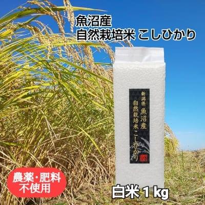 【新潟駅南マルシェ限定】【魚沼産|自然栽培米コシヒカリ】「白米」1kg【無農薬|無肥料】