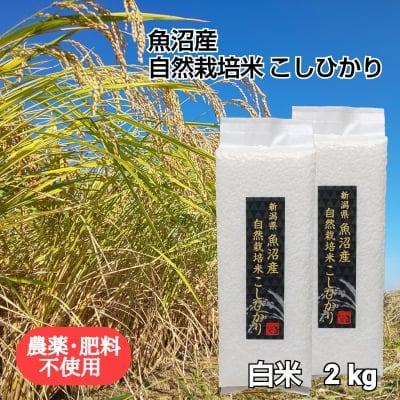 【魚沼産 自然栽培米コシヒカリ】「白米」2㎏【無農薬 無肥料】