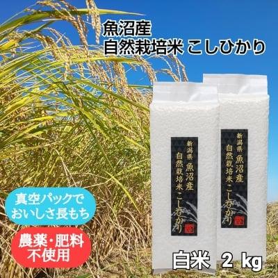 白米2kg【魚沼産|自然栽培米コシヒカリ】【無農薬|無肥料】
