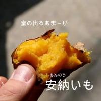 無農薬の焼き芋 安納いも10〜15個 1キロ (石焼き)【12月より順次発送】